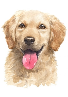 Pintura de acuarela, golden retriever