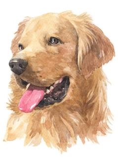 Pintura de acuarela de golden retriever.