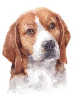 Pintura acuarela de perro beagle.