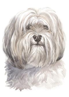 Pintura acuarela, perro blanco.