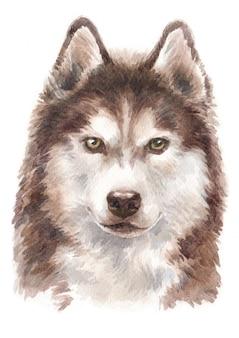 Pintura de acuarela, perro husky siberiano de pelo largo.