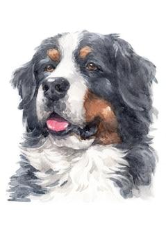 Pintura de acuarela de perro de montaña de berna