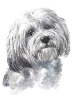 Pintura de acuarela de perros de raza havaneses