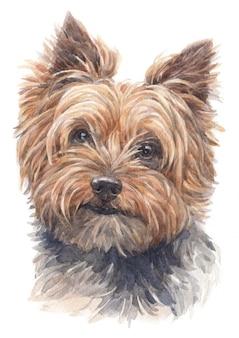 Pintura de acuarela de yorkshire terrier
