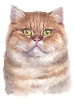 Pintura al agua de gato británico de pelo corto