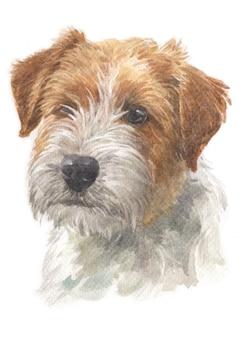 Pintura al agua de jack russell terrier.