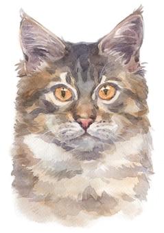 Pintura al agua de maine coon cat
