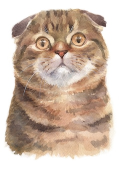 Pintura al agua de scottish fold shorthair cat