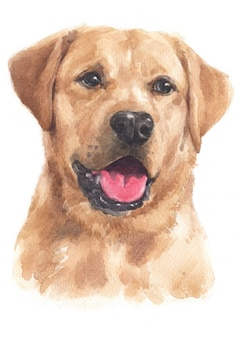 Pintura en color agua de labrador retriever