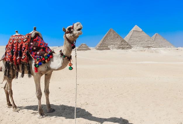 Pirámides con giza en el cairo, egipto.