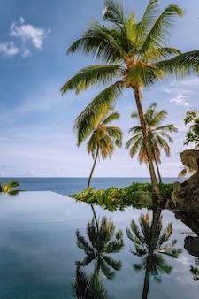Piscina infinita con cocoteros y vista al mar.