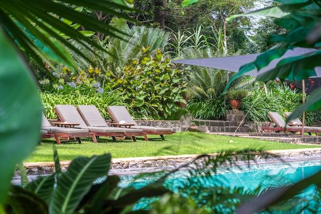 Piscina rodeada de exuberantes plantas tropicales. tanzania, áfrica oriental