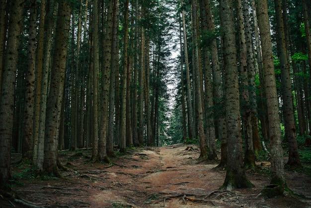 Pista forestal. se puede utilizar como fondo.
