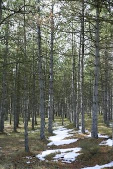 Pista de nieve en un bosque de pinos vertical, naturaleza