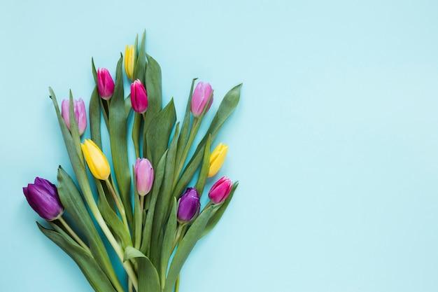 Plana pone flores de tulipán y hojas sobre fondo azul.