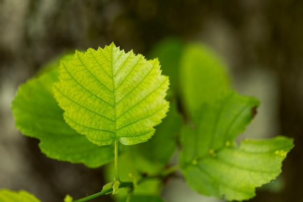 Plana pone las hojas de la planta con el fondo borroso