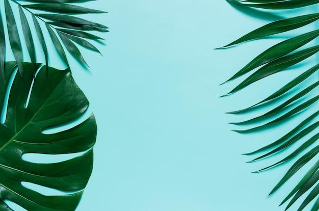 Plana verde pone ramas de hoja de palma tropical sobre fondo azul cian. espacio para texto, copia, letras.