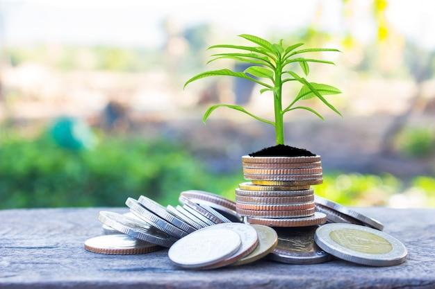 Planificación financiera, concepto de crecimiento de dinero.