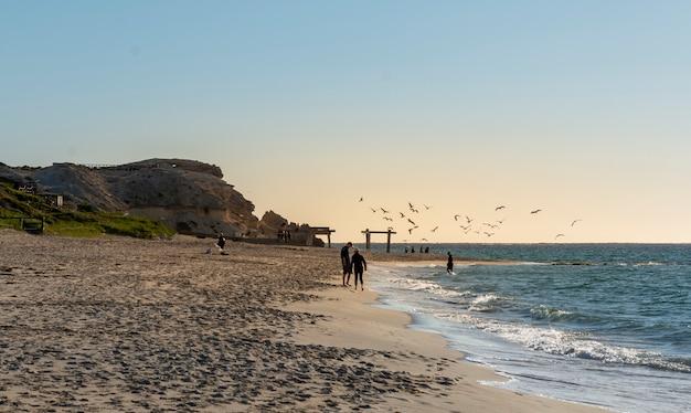 Plano amplio de gaviotas alimentándose en el mar durante la puesta del sol en manta ray bay en australia occidental