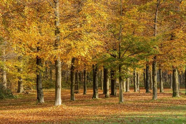 Plano amplio de un hermoso parque lleno de árboles en un día nublado