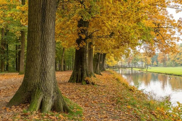 Plano amplio de un parque y un lago cubiertos de hojas secas con árboles alrededor del área.