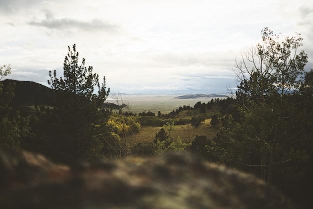 Plano amplio selectivo de árboles verdes bajo un cielo nublado blanco