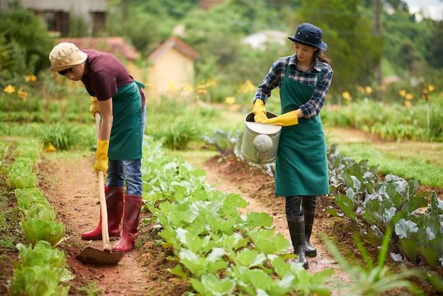 Plano completo de agricultores asiáticos que cultivan en la granja