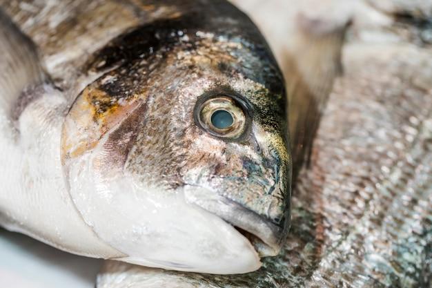 Plano macro de pescado congelado en la tienda