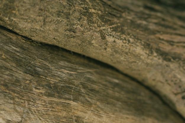 Plano macro de rama de árbol
