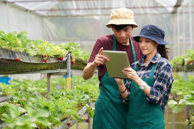 Plano medio de dos compañeros de trabajo de la granja frente a la cámara de pie en el invernadero y mirando la pantalla de la tableta