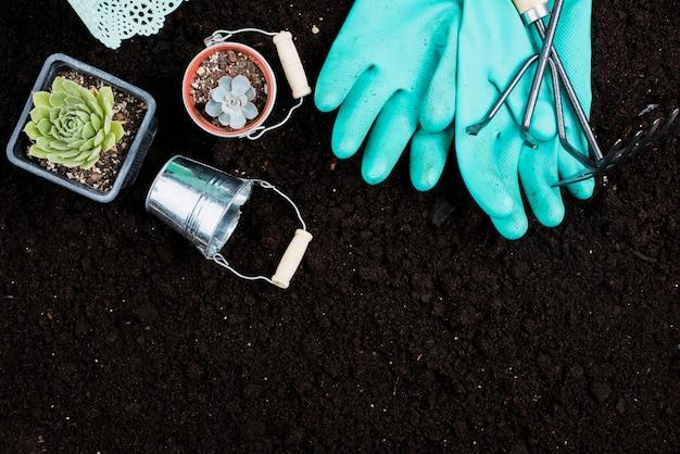 Plano de plantas y herramientas de jardinería.