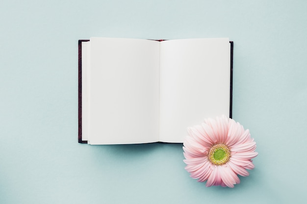 Plano pone flor rosa y diario en azul, vista superior. bosquejo