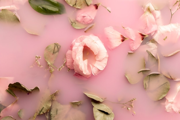 Plano pone rosas rosadas en agua rosa