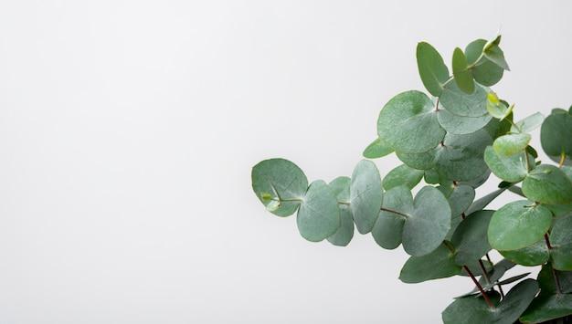 Planta ambiental de primer plano con espacio de copia