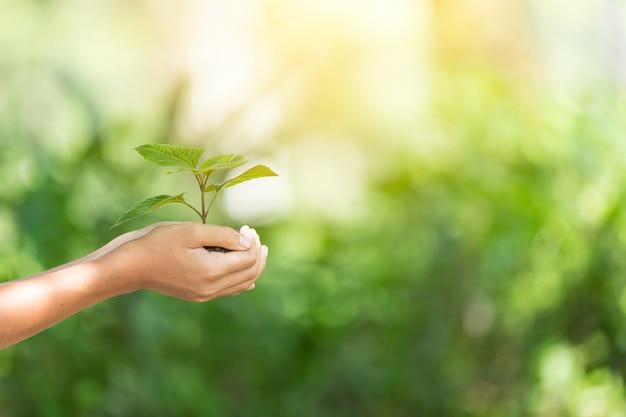 Planta un árbol. símbolo de la primavera y el concepto de ecología