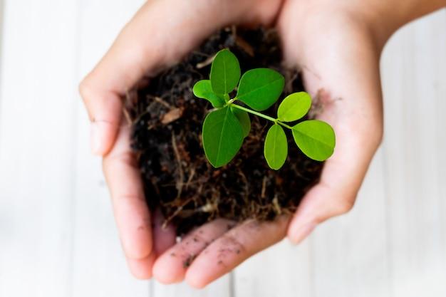 Planta de brotes y suelo en manos. crecimiento y prevención de árboles por humanos.