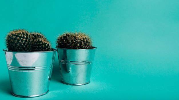 Planta de cactus en macetas de aluminio sobre fondo turquesa.