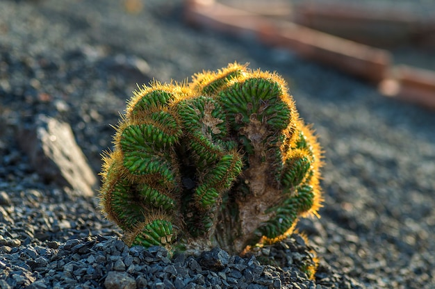 Planta de cactus en el parque