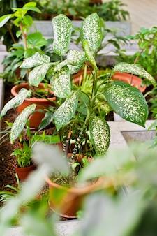 Planta de la casa en maceta. la decoración del hogar y el concepto de amante de los árboles.