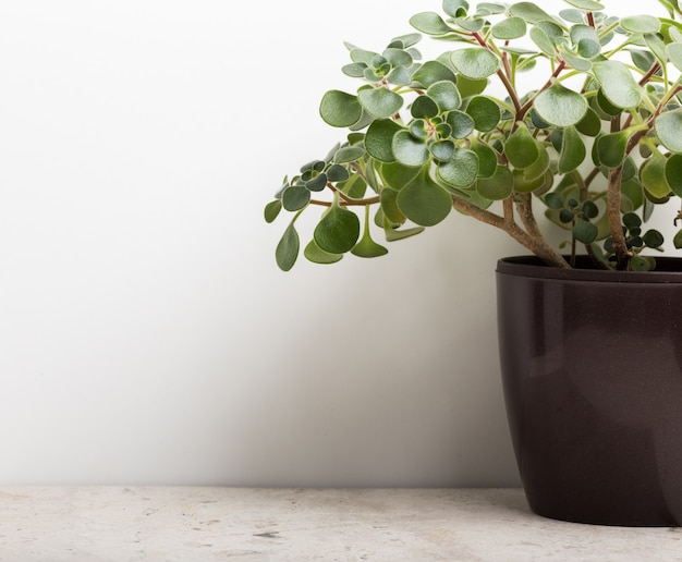 Planta de la casa en maceta negra