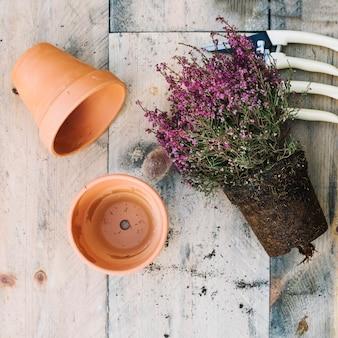 Planta cerca de ollas y herramientas vacías