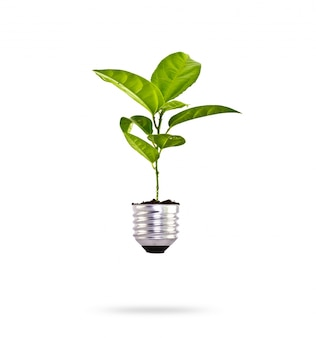Planta creciendo en una bombilla