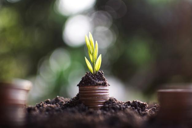 Planta creciendo con el dinero de la moneda yendo al éxito.