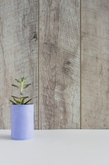 Planta de cultivo fresco en la lata pintada en escritorio blanco contra pared de madera
