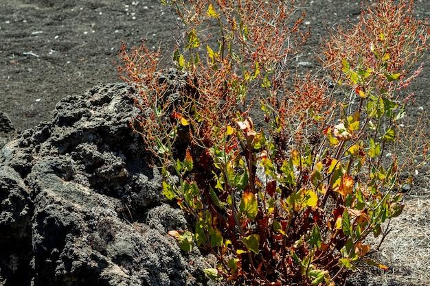 Planta del desierto que crece junto a una piedra