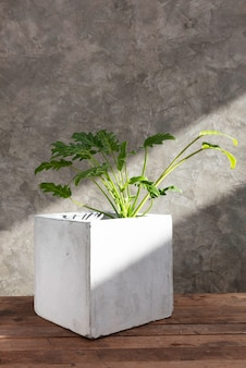 Planta de filodendro en maceta de hormigón sobre mesa de madera