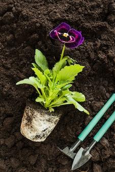 Planta de flor de pensamiento y herramientas de jardinería en suelo fértil.
