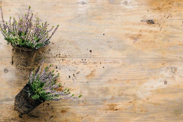Planta de flores con suelo en mesa de madera.