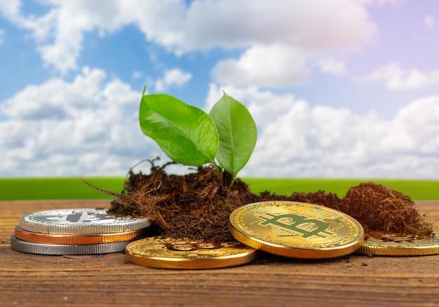 Planta de germinación y crecimiento de bitcoin de la moneda criptográfica bitcoin