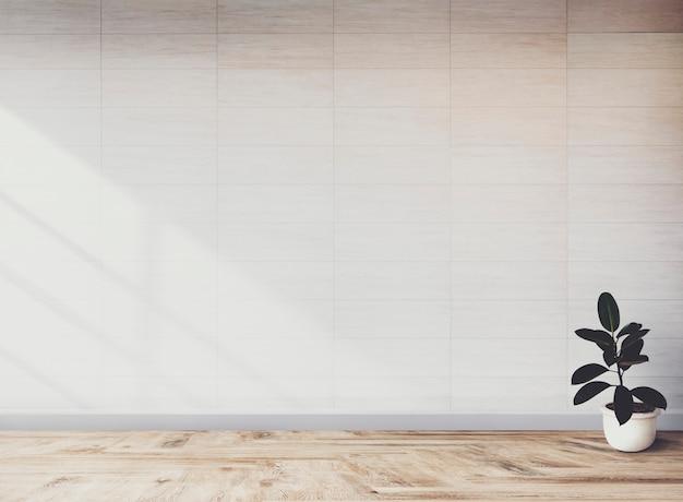 Planta de higo de goma en una habitación vacía.